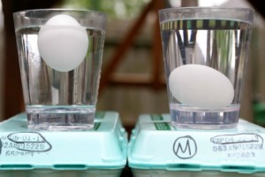 Preserving Eggs with Mineral Oil – One Year Later…
