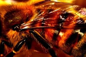 Honey: 15 Alternative Uses for Survival